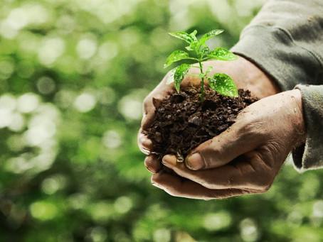 """""""Mantengamos vivo el suelo, protejamos la biodiversidad del suelo"""""""