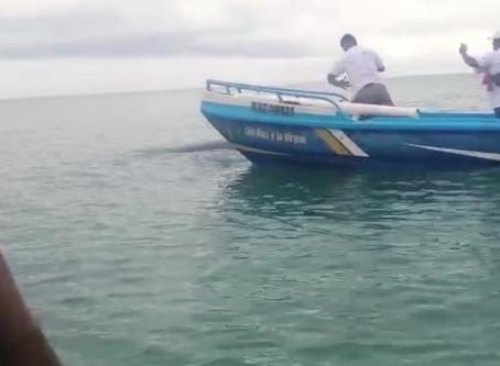 Ballena jorobada varada en las costas de Esmeraldas fue rescatada