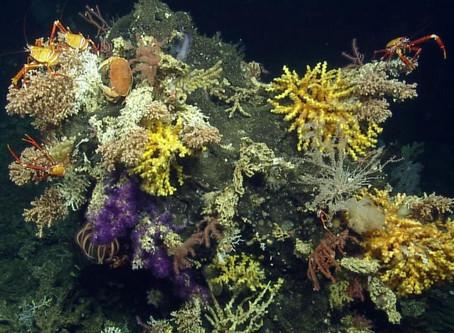 30 especies de invertebrados marinos se descubren en Galápagos - Ecuador