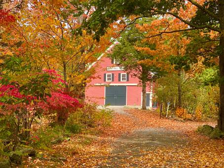 Apple Picking Near Ogunquit, Maine