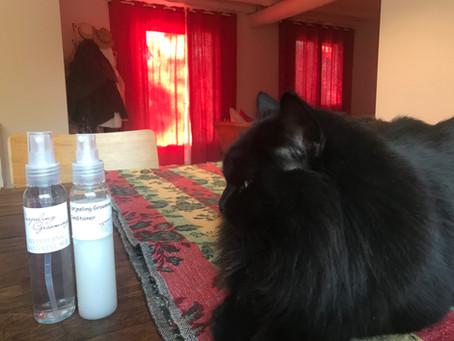 Chat avec noeuds ou chats sans noeuds - Toilettage