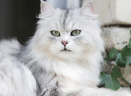 Miss France de la Maison de l'Ours