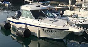 regulus-2.JPG