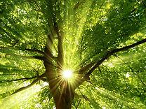 conseils écologiques, vivre sainement, réduire ses émissions de CO2