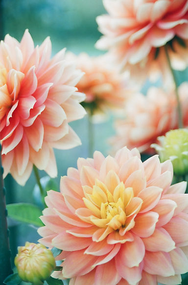 EE Photo Pink Flowers.jpg