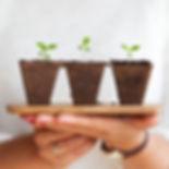 Photo- 3 Plants Growing.jpg