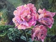 Dewey Roses