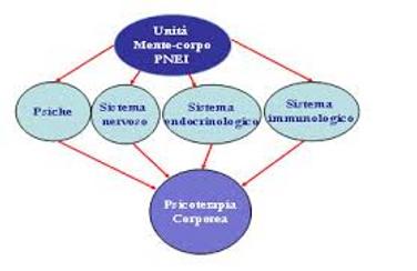 PNEI-SCHEMA.png