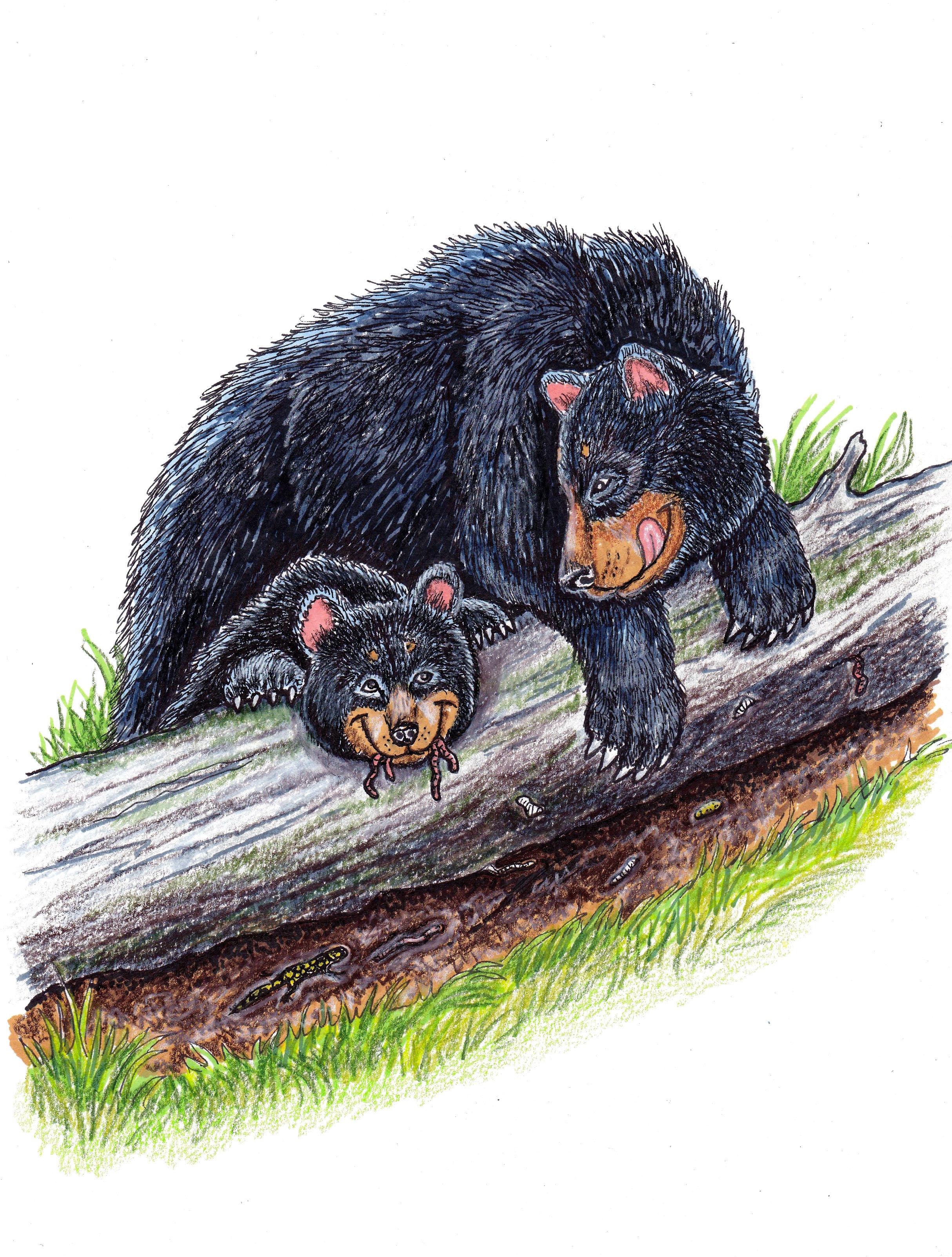 Bad Bear 2