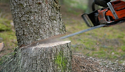tree-cutting-service_edited.png