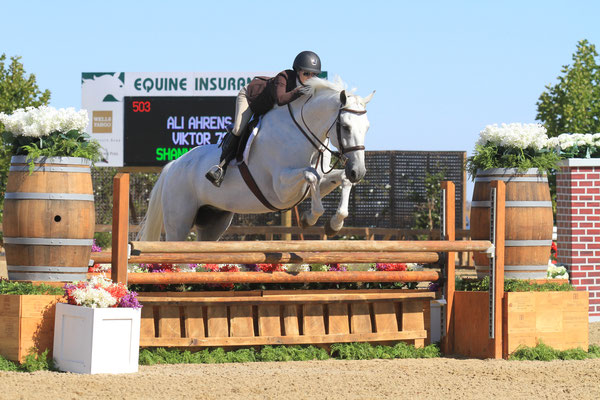 landmark white horse.jpg