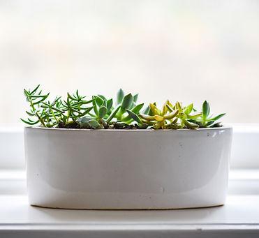 flower-pot-flowerpot-flowers-plants-6803