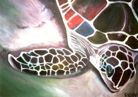 Lamborghini turtle