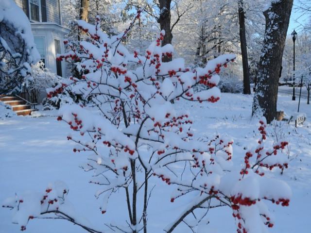 Winter Interest for your Garden