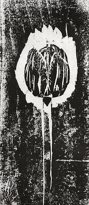 HERTZ Chloé, Tulipe Noire