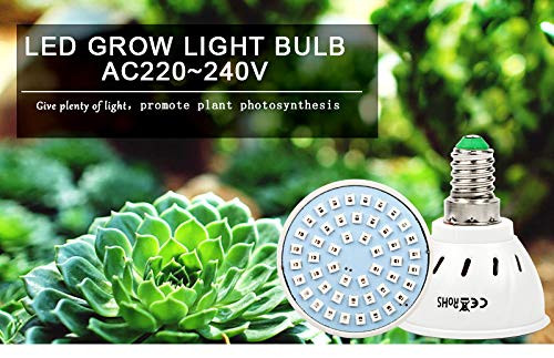 SENECIO GROW LIGHT