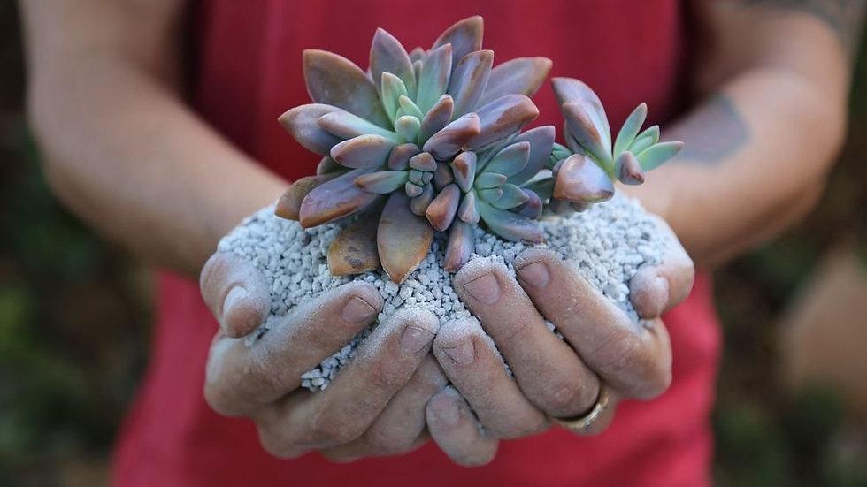 SENECIO® Horticultural Pumice Stone Lava Rock Small Grain For Succulent & Bonsai