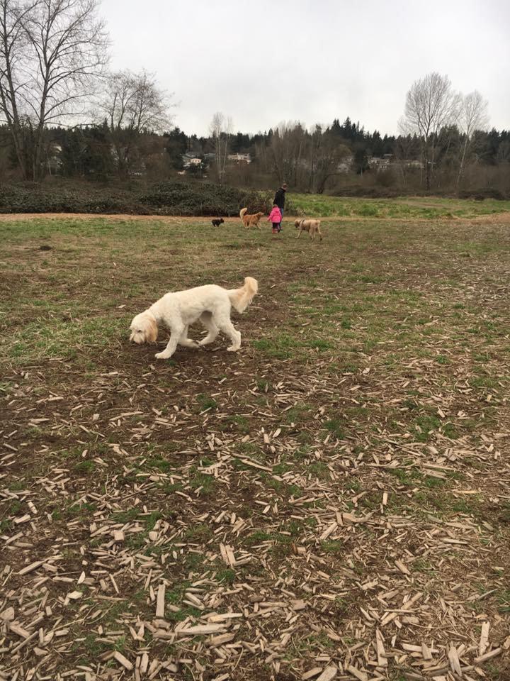 Dog Park Visit 1st Tail