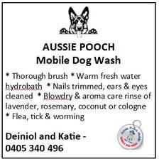 Aussie Pooch