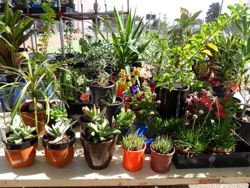 plants41.jpg