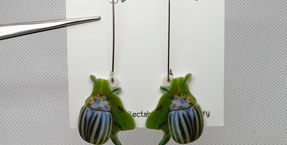 Leptinotarsa beetle (Chrysomelidae) acrylic earrings