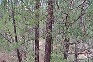 Cabin north of Payson, Arizona