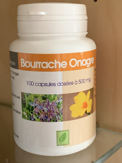 BOURRACHE ONAGRE