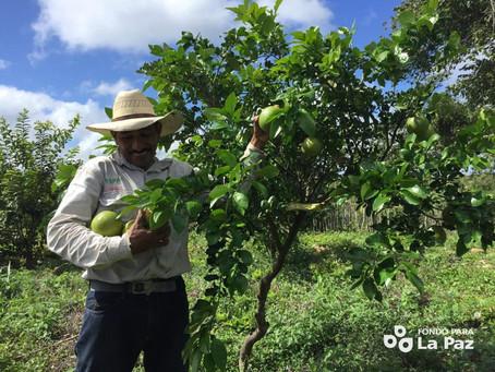 Historias de Cambio en Calakmul: Don Gumaro