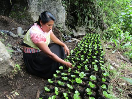 Los mexicanos que luchan contra la pobreza y exportan su café a Japón