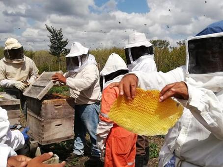 Enriqueciendo la calidad de vida de apicultores de Calakmul