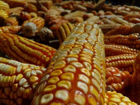 Banco de semillas: Tejiendo vidas entre Campeche y Chiapas.