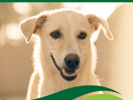 Puppy training begins Aug. 21