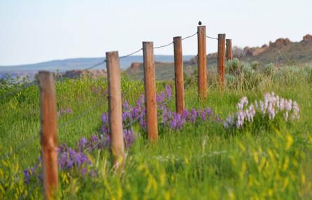 Spring Fenceline