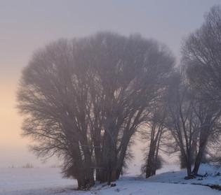 Trees Keep Secrets