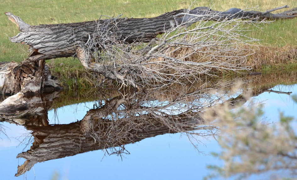Wooden Reflection