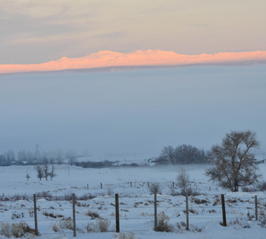 Snowies above the Fog