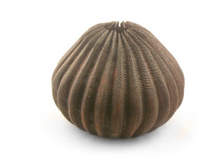 Angry Wood Sea Urchin