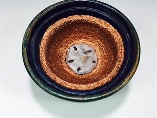 Sand Dollar Wobble Bowl