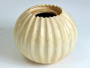 Blond Sea Urchin