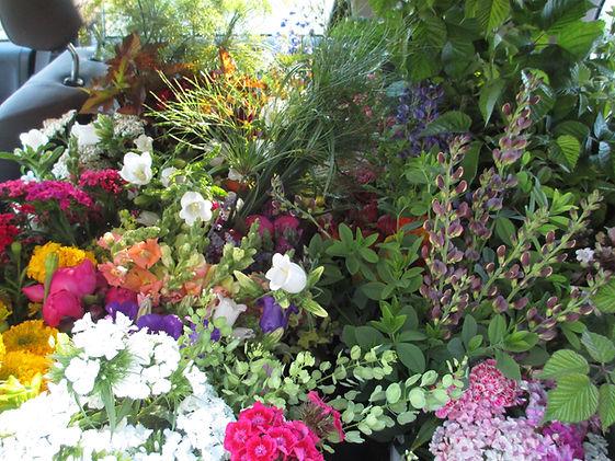 car full of bulk flowers: baptisia, sweet william, blackberry foliage