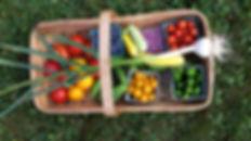 basket of fruit and veggies
