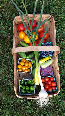 basket of fruit and veggies