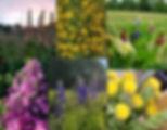 perennial flowers 1 2020.jpg