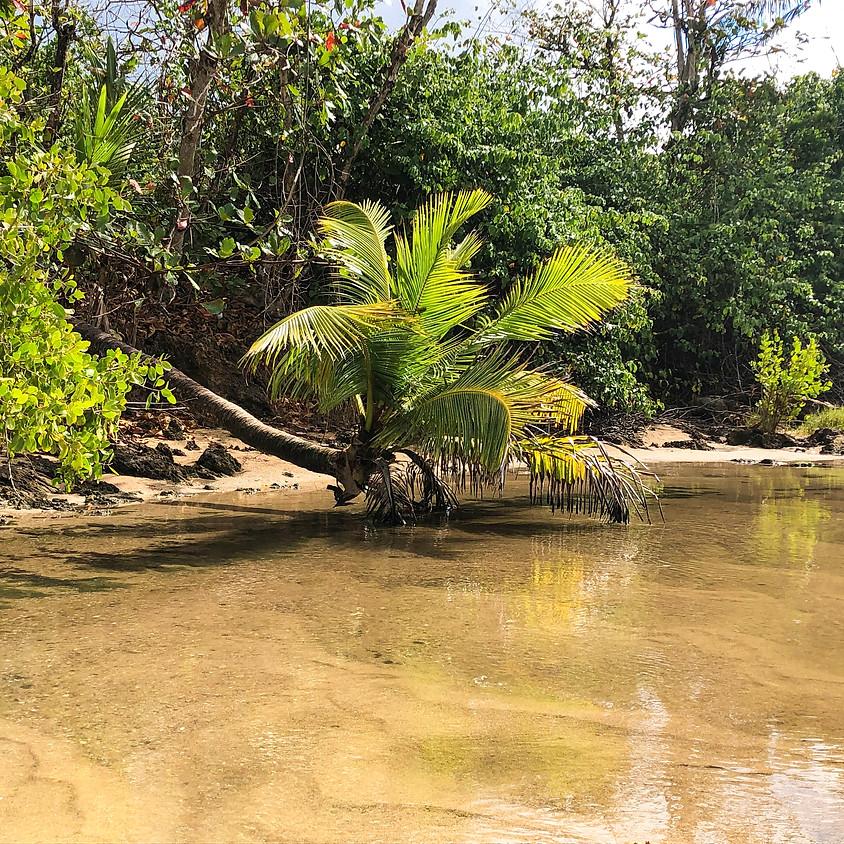 Excursión Manatí, 18 de julio 2021 - SOLD OUT