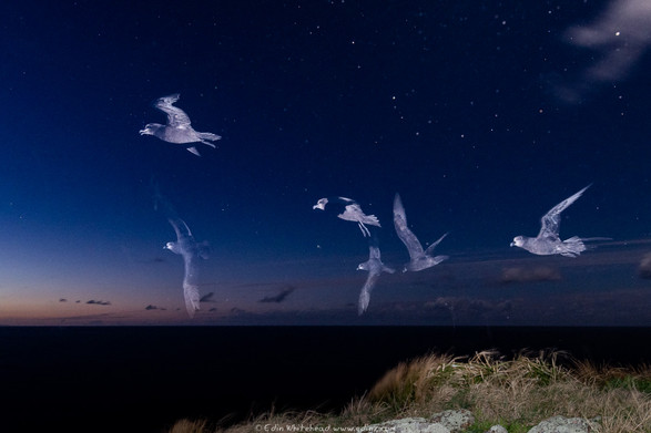 Edin Whitehead | Mokohinau Islands