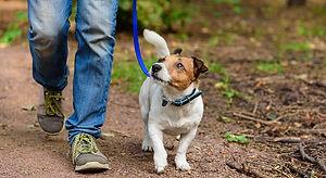 1143749718 Walking the dog.jpg
