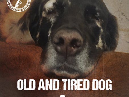 SOUTHDOGROCK - Old and Tired Dog