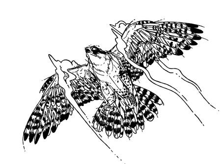 Vincent Krennerich - Flugträume
