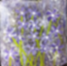 purple flowers 2019.PNG