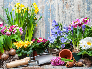 Spring Checklist - Preparing Your Garden For Summer